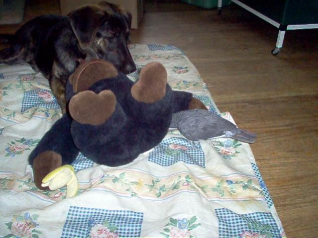 parrot dog and gorilla.jpg
