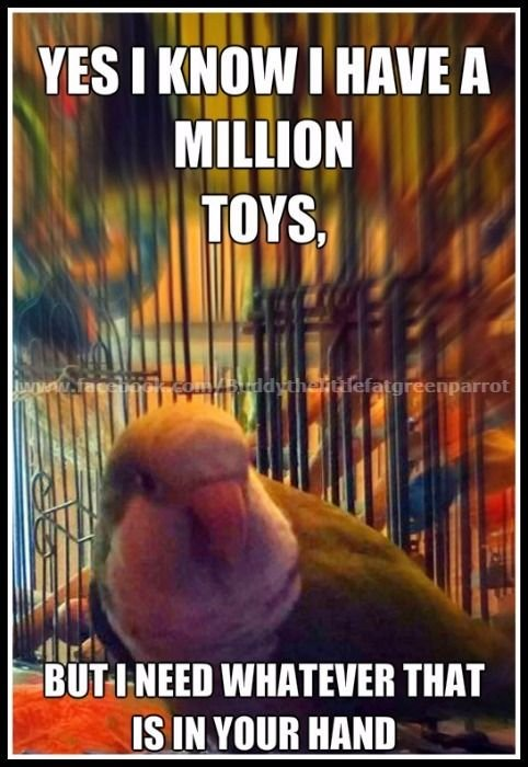 parrot wants everything in your hand.jpg