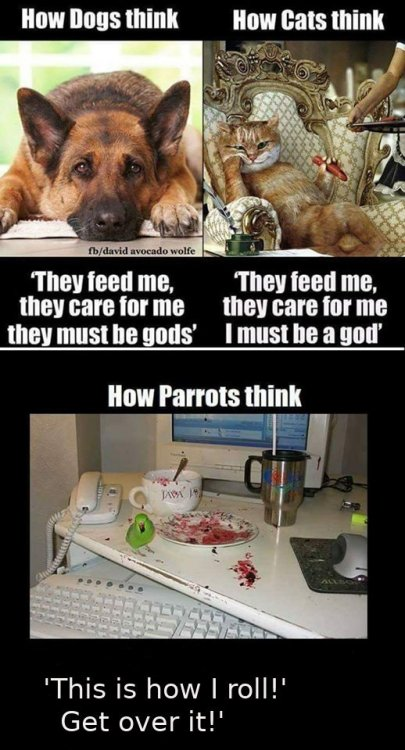 how dogs cats parrots.jpg
