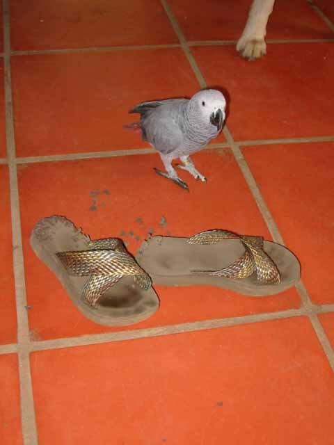 Lucy destroyed my shoe.jpg